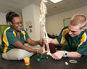 Athletic Training and Education Program