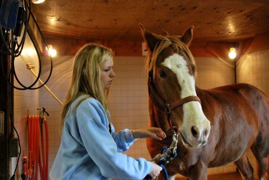 intermediate horsemanship syllabus 2018 premier exhibitor contest syllabus 1  2 horse - intermediate exhibitor 14 goat - intermediate exhibitor 2  horsemanship riding class placing th.